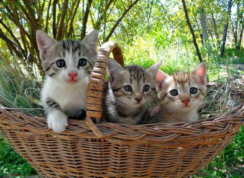 Кошки в лукошке, или 1+2