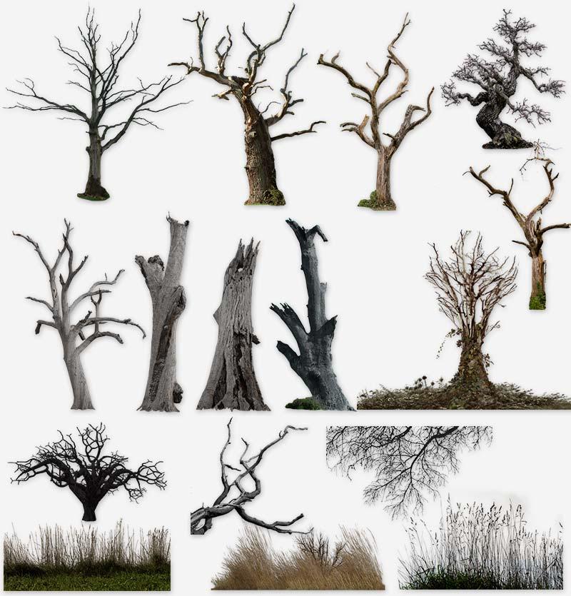 Засохшие деревья, ветки, трава на прозрачном фоне