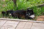 Савватьевские кошки
