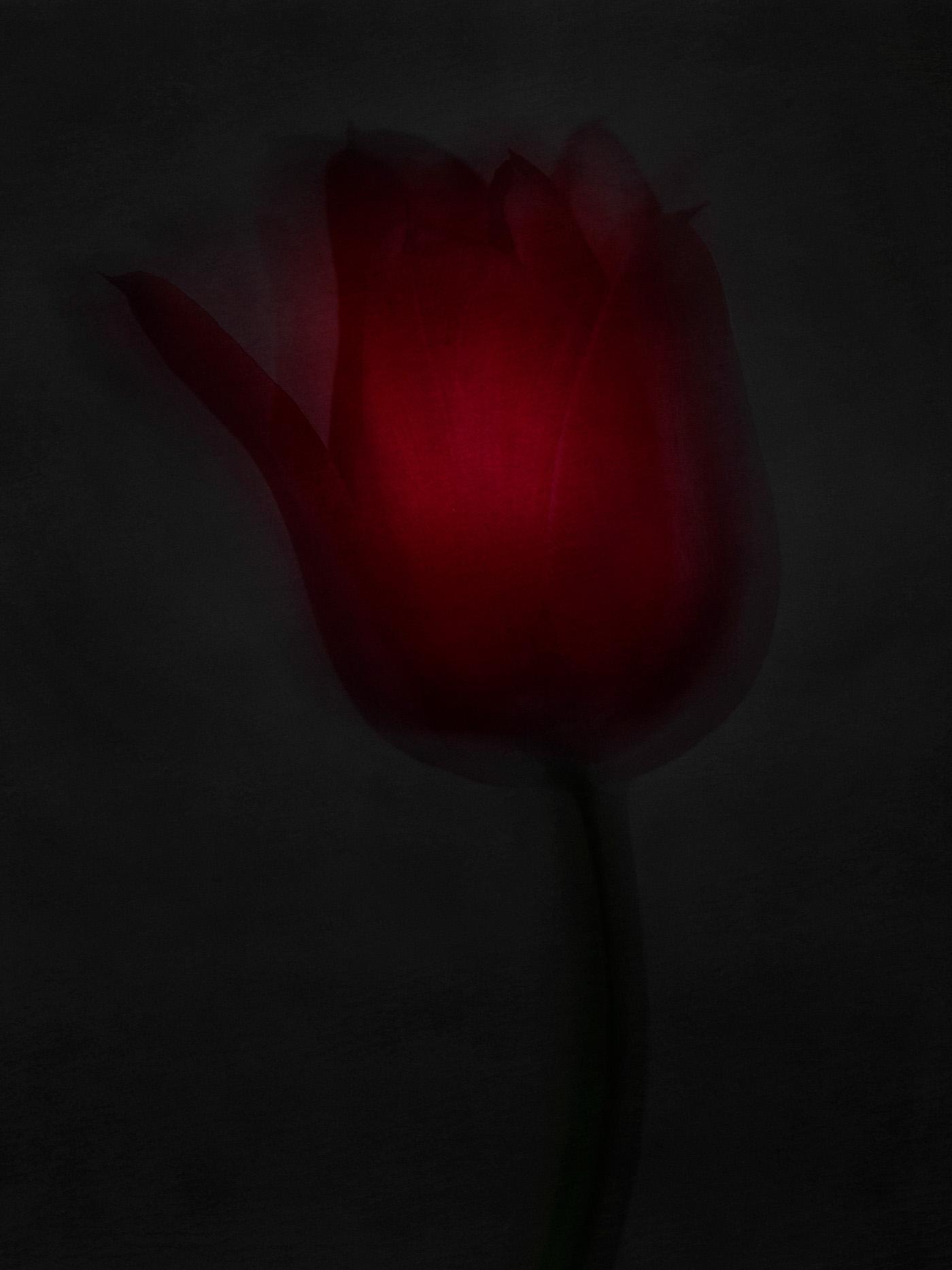 Цветы / фото Robert Peek