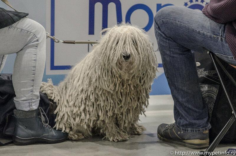 """Выставка собак """"Евразия - 2017"""""""