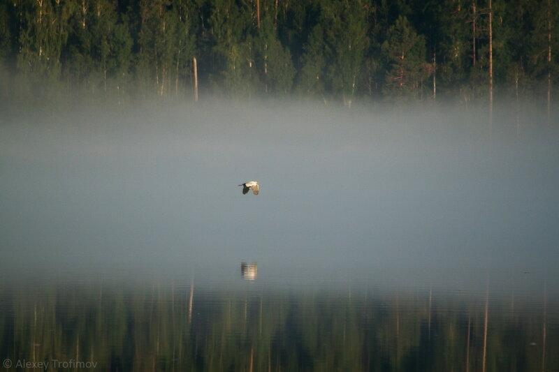 A&B_2017_07_Heron-in-Fog-2.jpg