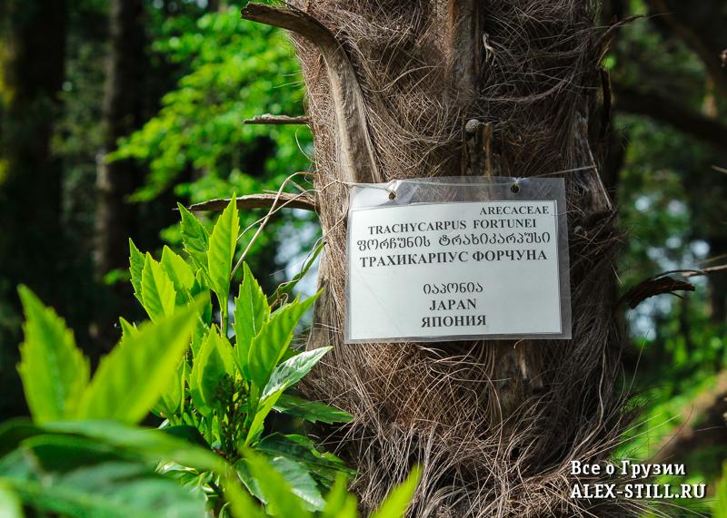 В ботаническом саду растут самые разные деревья
