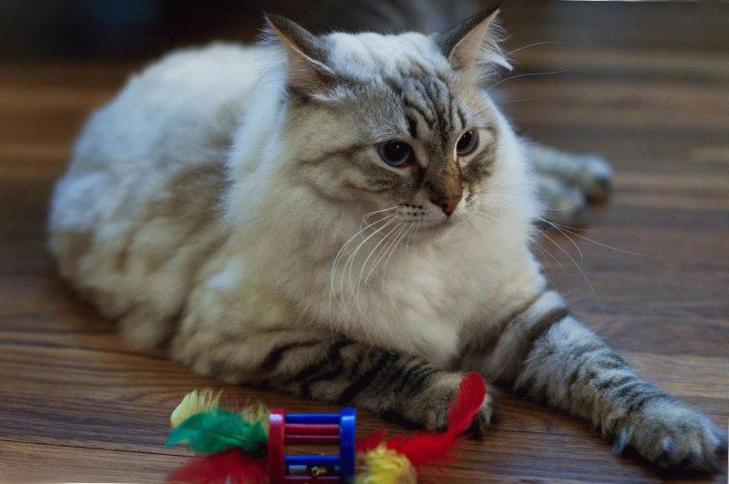 По моим наблюдениям, девяносто процентов злостных алкоголиков терпеть не могли кошек, большая ча