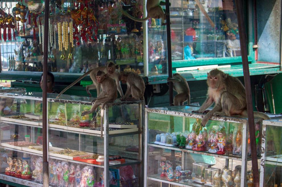 Monkey Buffet Festival: пир для обезьян, которые в обычные дни промышляют воровством.