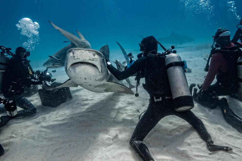 9. Акула-молот. Максимальная зарегистрированная длина составляет 6.1 м. Международный союз охра