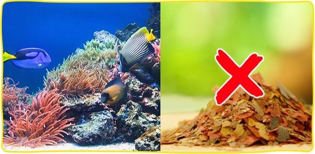 © depositphotos  Пожалуй, самыми безопасными для аллергиков являются рыбки . Нопри условии, е
