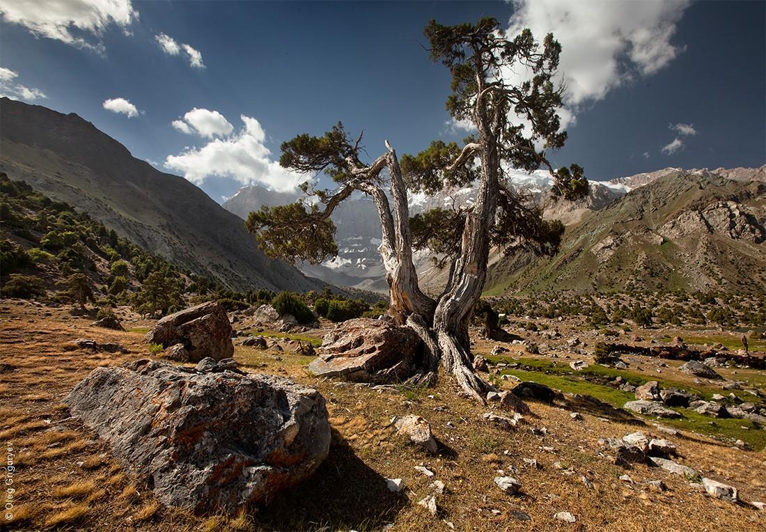 13. Просто одинокое мощное дерево среди скал и камней.