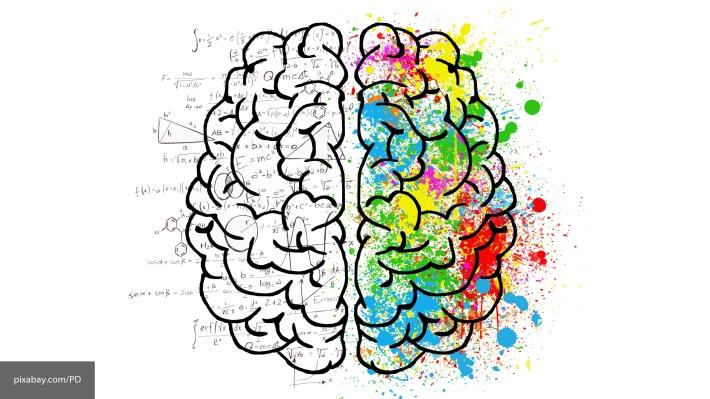 Ученые: Творческие способности человека зависят отсвязей между полушариями