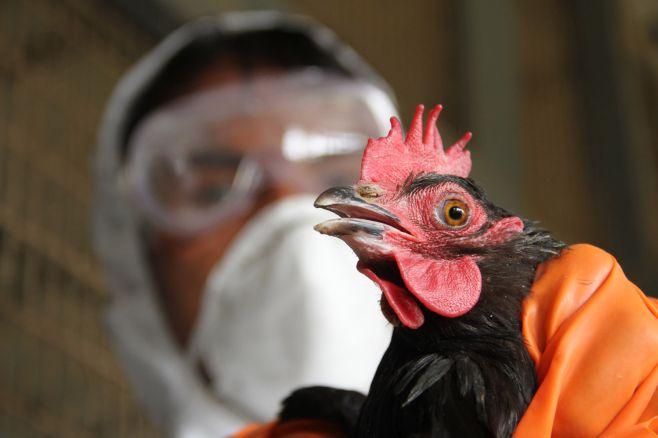 Продукцию, заражённую птичьим гриппом, обнаружили вУдмуртии