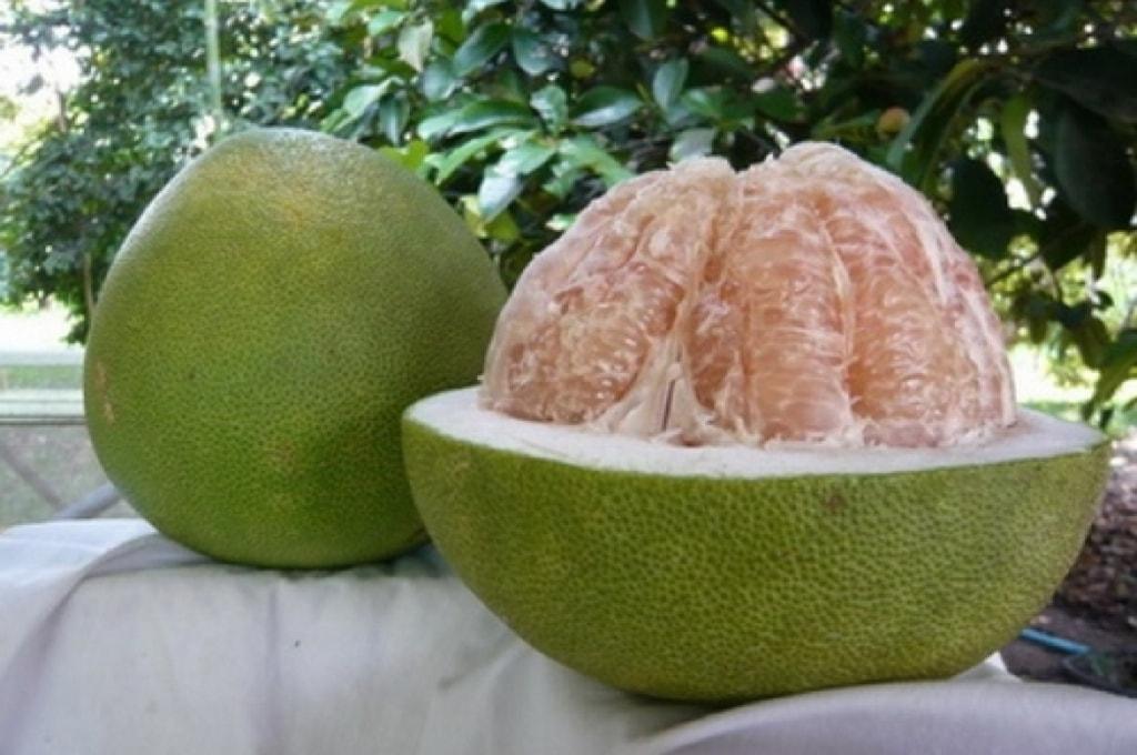 Помело - Thongdi