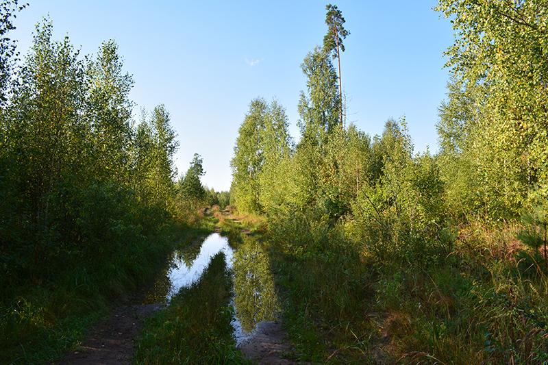 леса 21.jpg