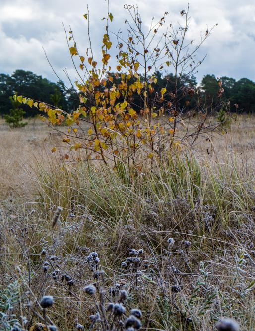 березка на поле осенью