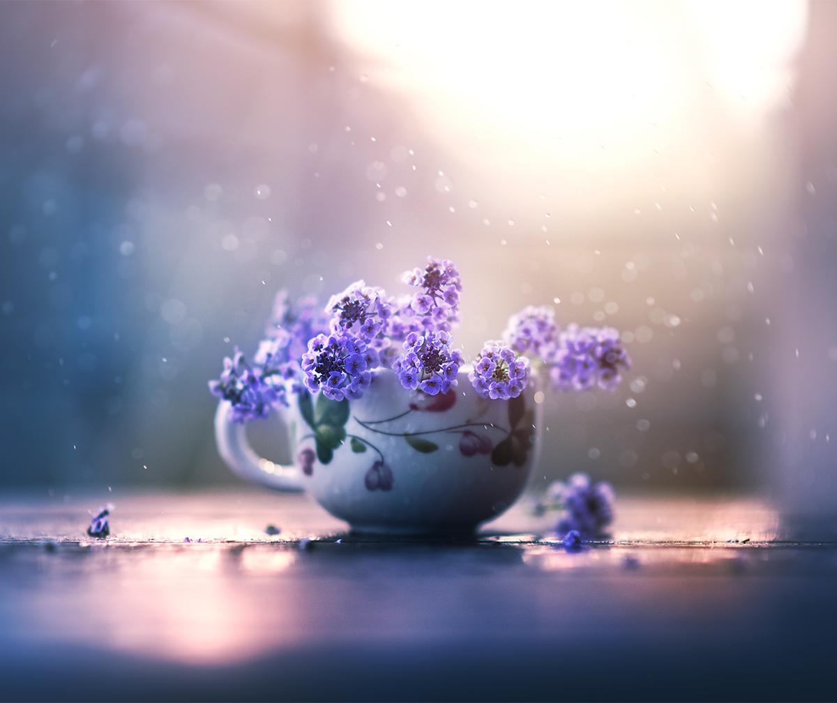 Цветочная история / фото Ashraful Arefin