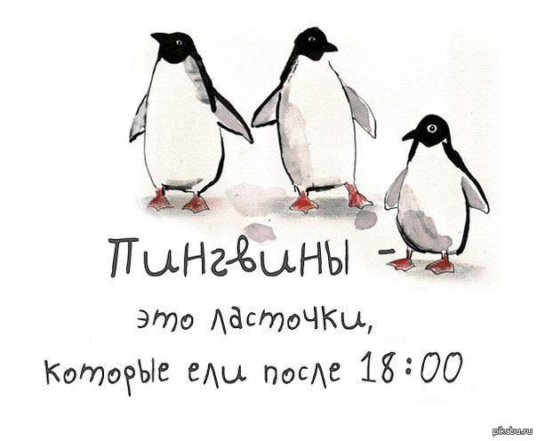 Открытки. С Днем полярника! Пингвины - это ласточки, которые ели после 18-00