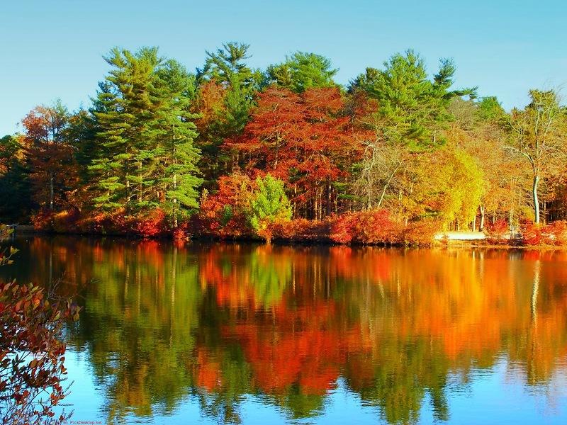 Открытки. Осень. Природа прекрасна открытки фото рисунки картинки поздравления