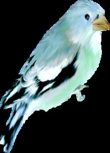 Птицы голубые