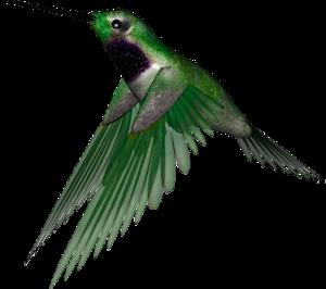 птички зеленые