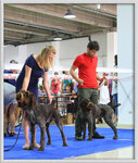 Выставка собак Алматы весенний