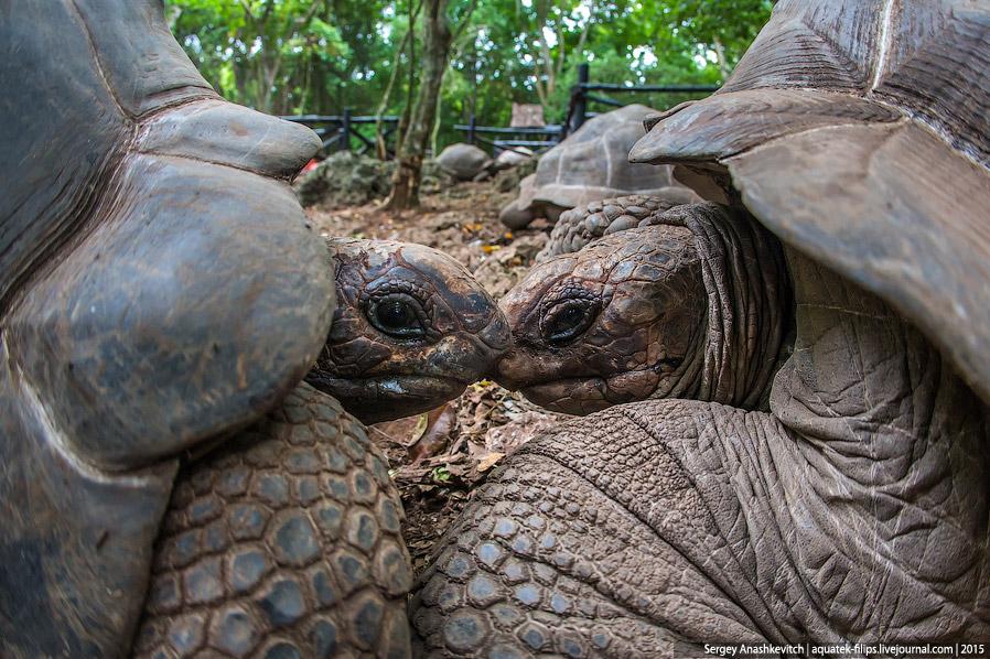 6. Черепахи — тоже люди © Им тоже хочется секса, правда происходит все очень медленно и забавно