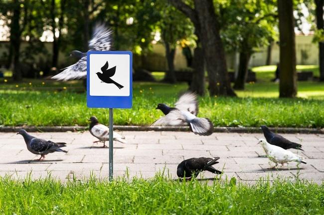 © TINYROADSIGN  «Аэропорт для птиц»— один иззнаков, появившихся вВильнюсе входе проекта Ti