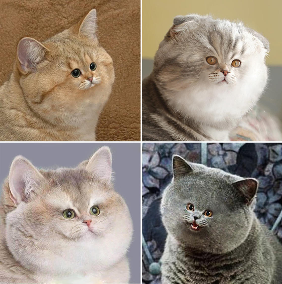 Tiny Face Cats - Internet is giving weird tiny faces to cats