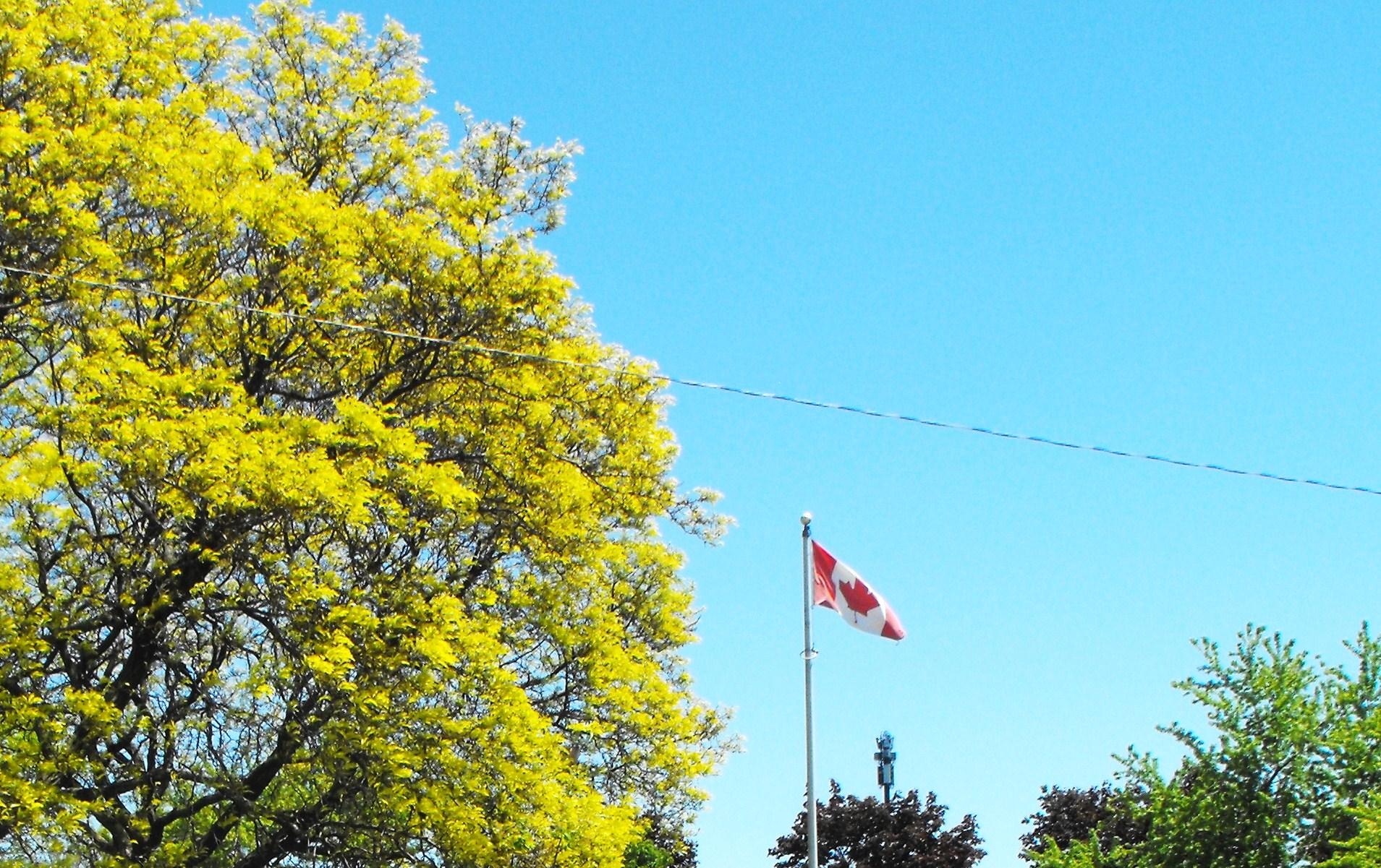 Канадский  флаг.