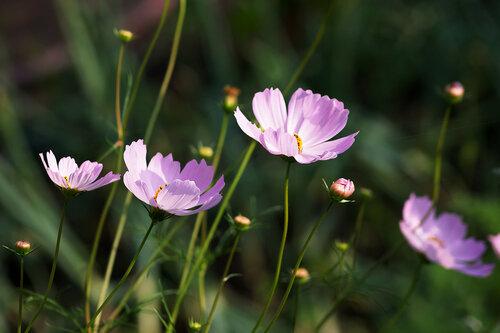 Бесхитростные светлые цветы