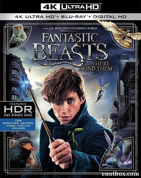 Фантастические твари и где они обитают / Fantastic Beasts and Where to Find Them (2016) | UltraHD 4K 2160p