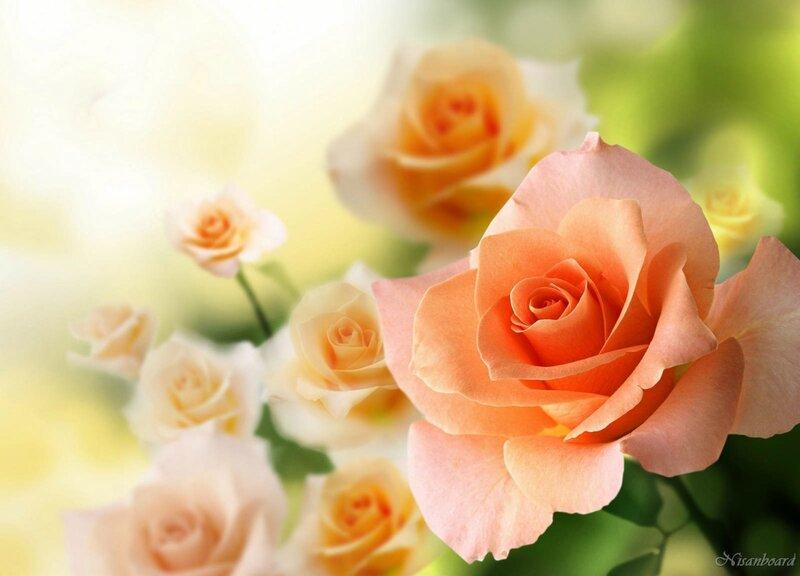 Обои для рабочего стола розы красивые во весь экран