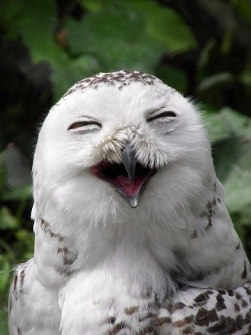 happy owl9.jpg