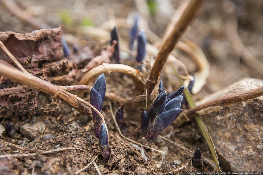 Суровая весна на Курилах
