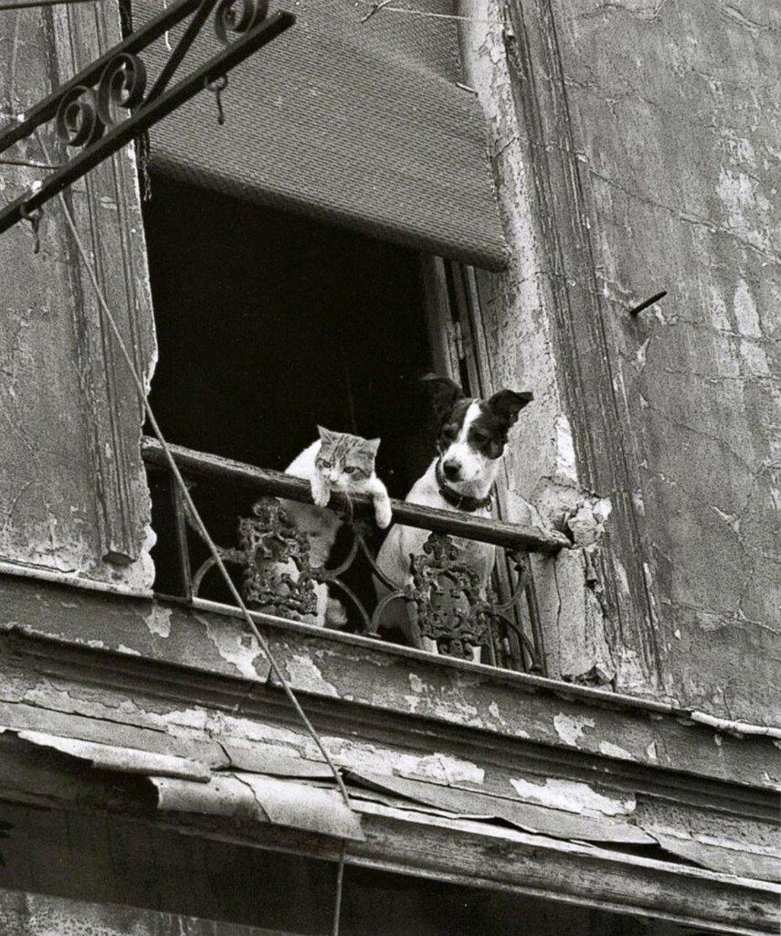 1950-е. Друзья