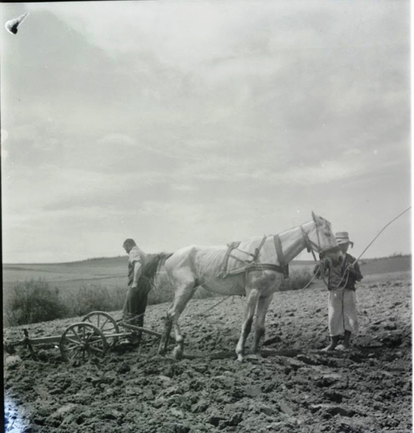 Хаим Симха Мехловиц, фермер и кожевник, Вышны Апса