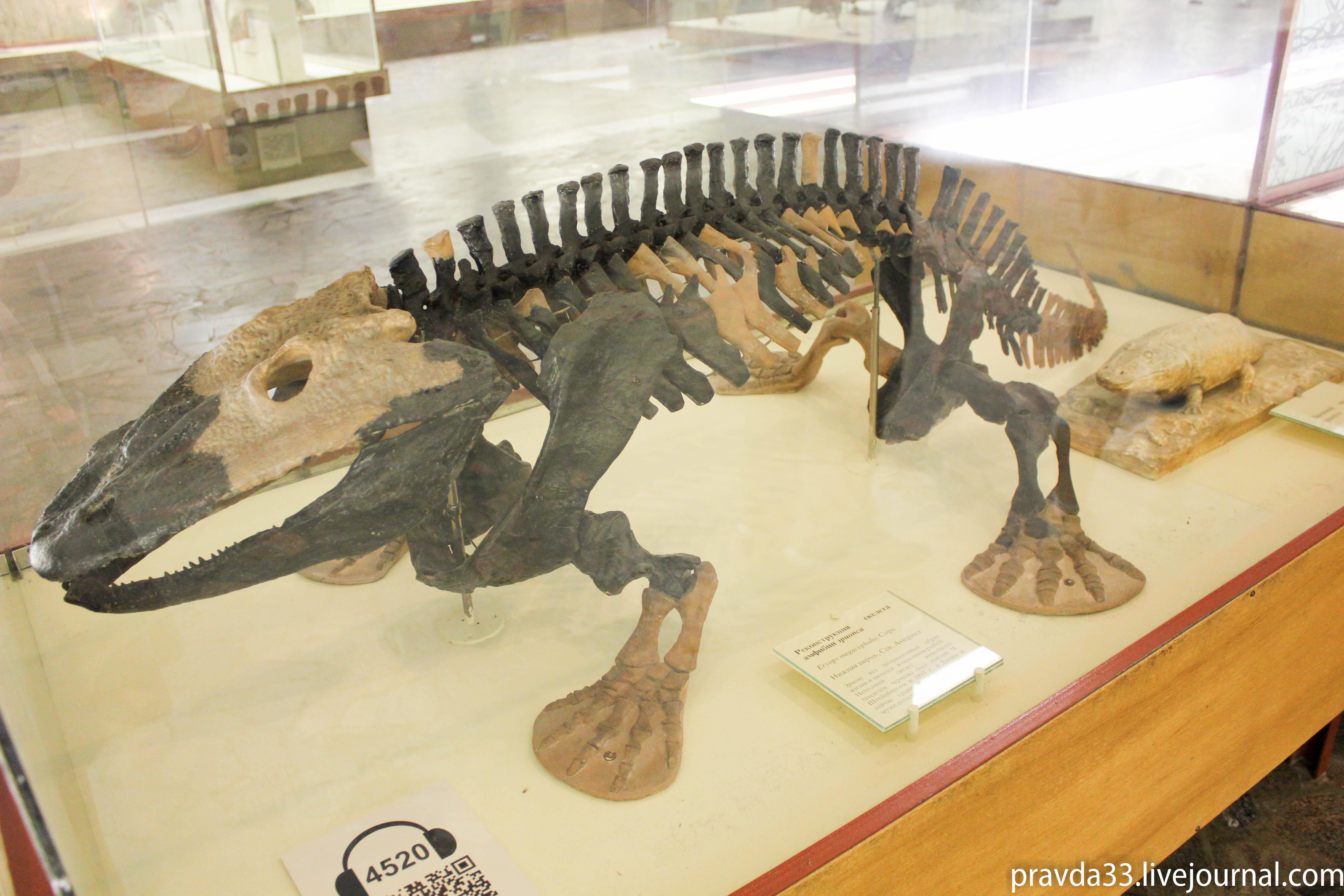 Музей палеонтологии-19.jpg