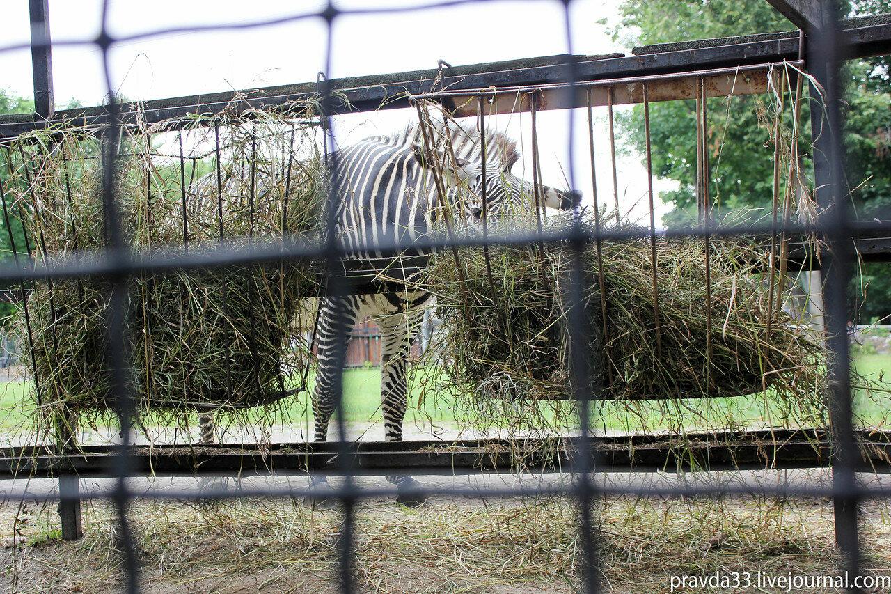 Московский зоопарк-19.jpg
