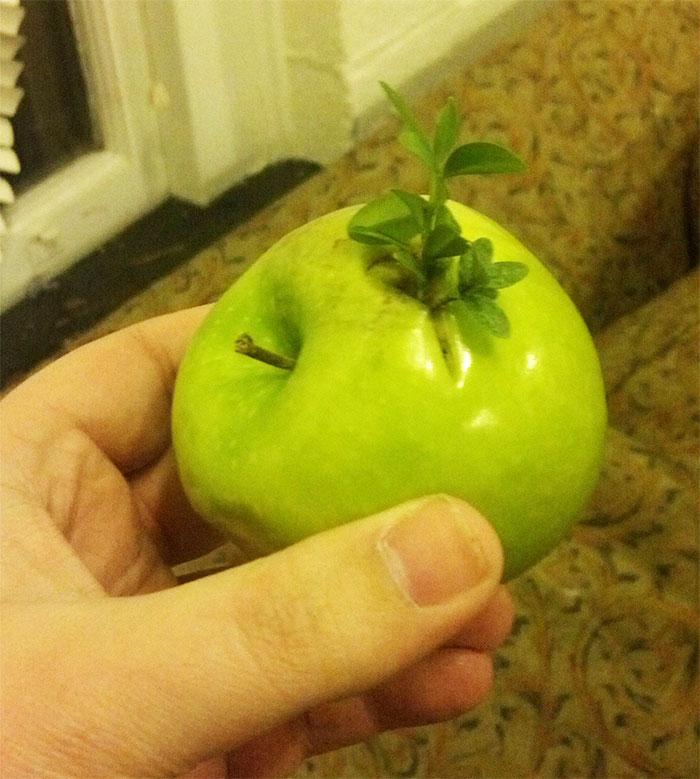 Некоторые проросшие овощи и фрукты выглядят пугающе