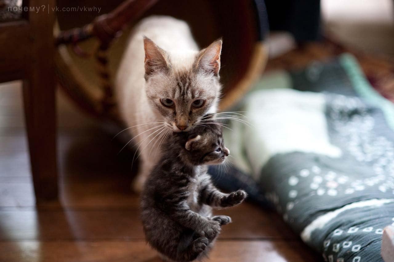 Она его берет нежно а потом дает киску