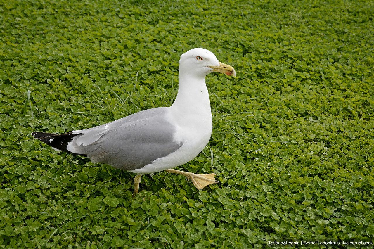 Итальянские птицы