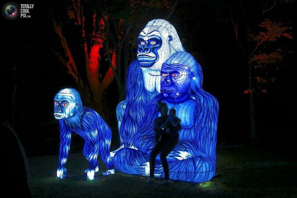 Скульптуры Зоопарка Таронга, изображающие находящихся под угрозой исчезновения животных: западная го