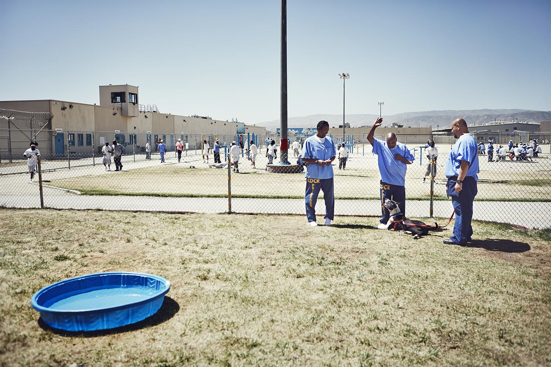 Собаки спали в будках на общей территории тюремного корпуса. Почти всю работу по уходу за животными