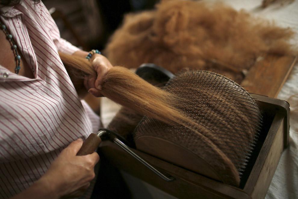 16. У Лизы есть 14 альпак на ферме, и они производят около 50 килограммов шерсти в год. (Фото R