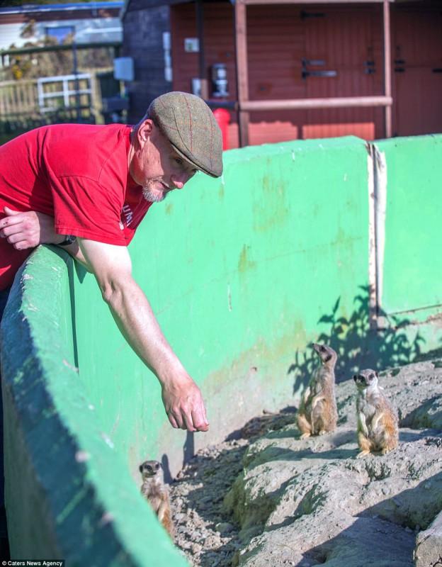 У семьи Твиди уже было 30 животных, когда они начали искать для них подходящее место. Увидев в прода
