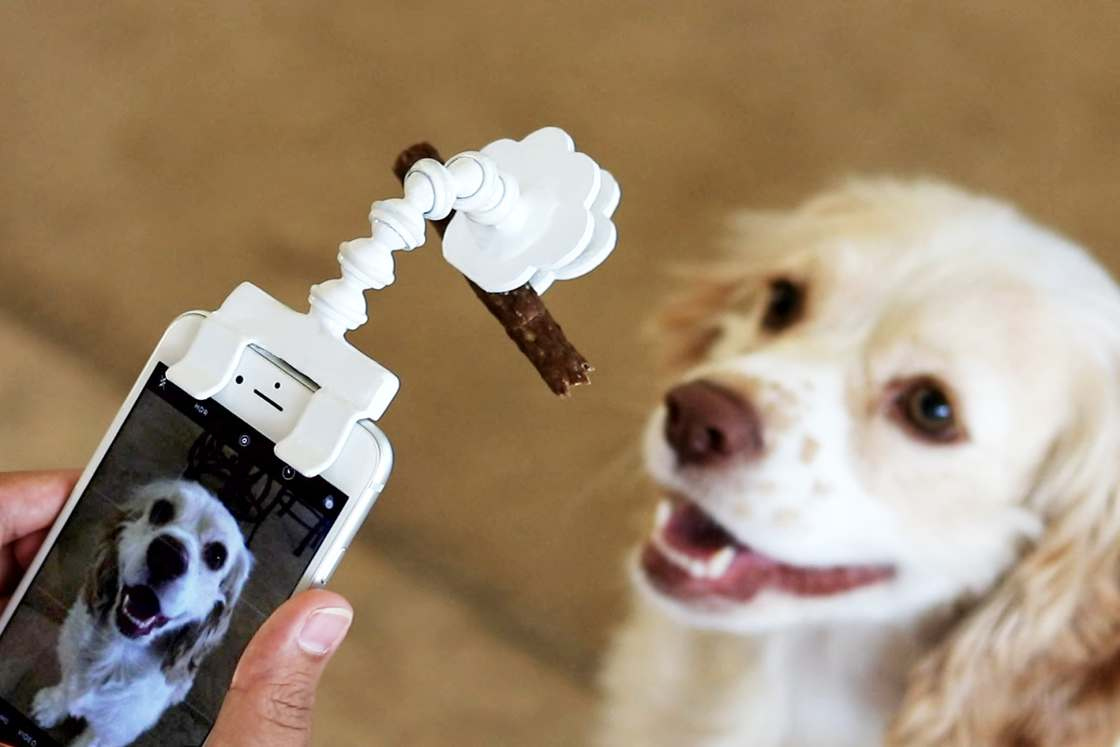 Flexy Paw – This gadget helps you take pictures of your dogs and cats (7 pics)