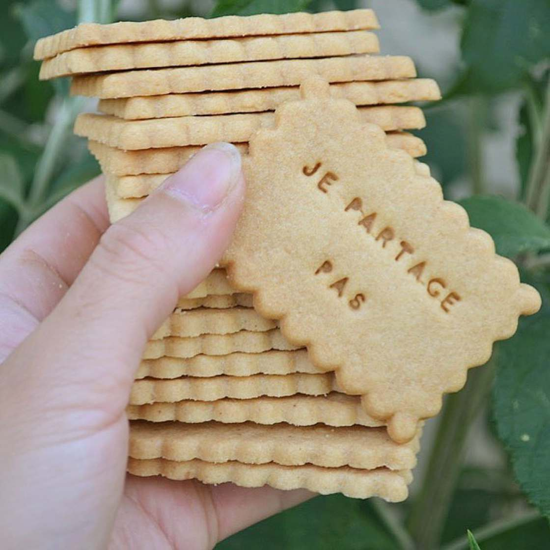 The expressive and very twisted biscuits of Shanty Biscuits