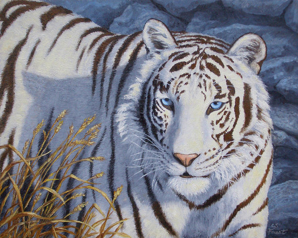 white-tiger-crystal-eyes-crista-forest.jpg