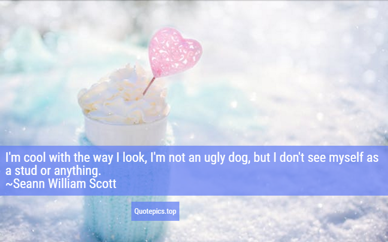 I'm cool with the way I look, I'm not an ugly dog, but I don't see myself as a stud or anything. ~Seann William Scott