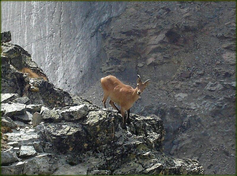 На горных тропах. Жизнь на скалах.jpg