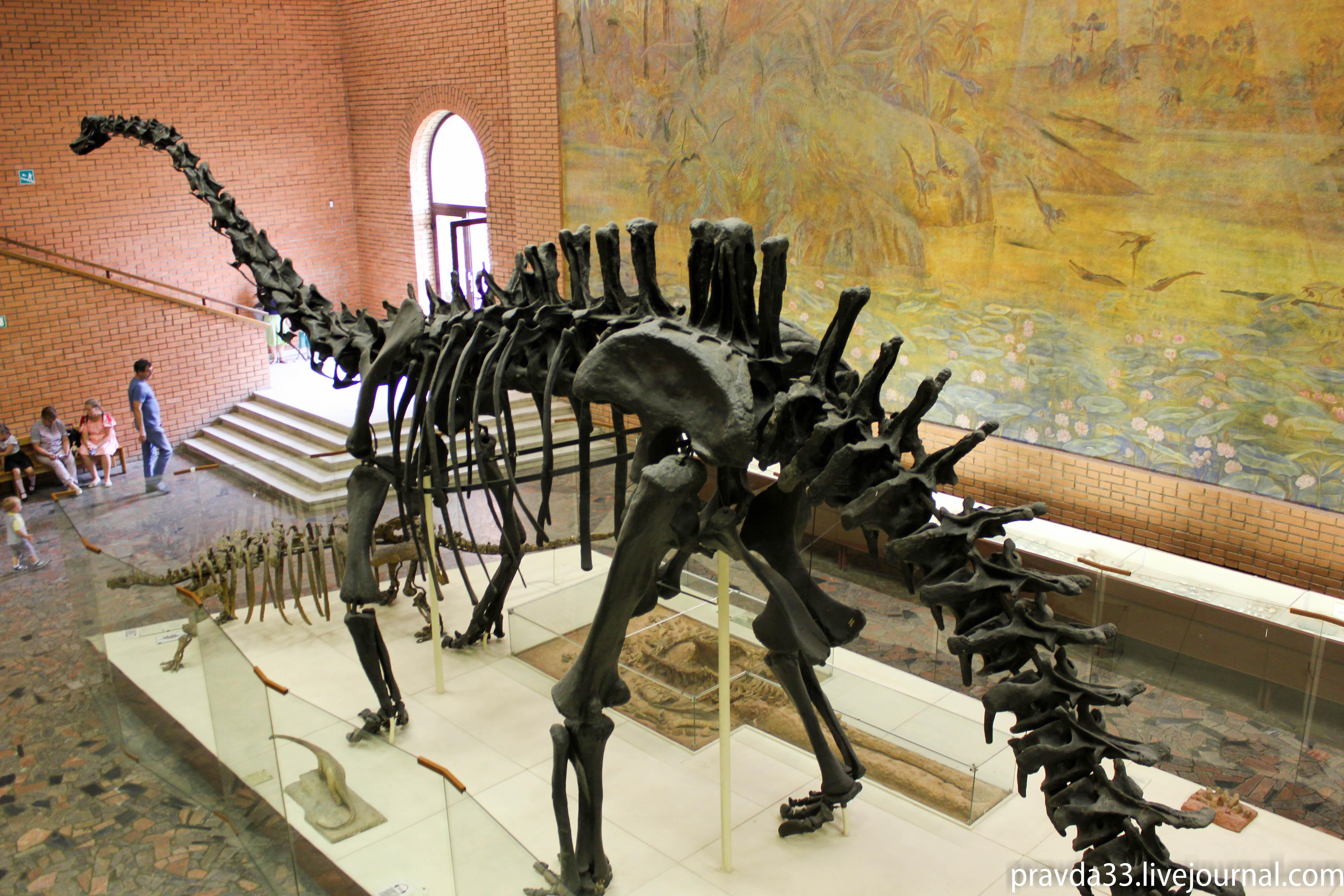Музей палеонтологии-44.jpg