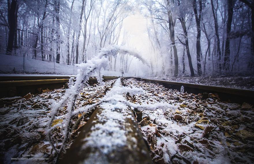 Зимний лес в сказочном убранстве